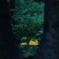 写真: 彼岸の黄花