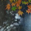 写真: 色葉の影