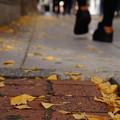 写真: 足元の秋~御堂筋