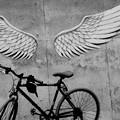 Photos: 翼が欲しい