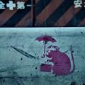 Photos: 傘を差したネズミ