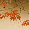 照る葉に散る葉
