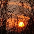 Photos: 夕日の巣ごもり