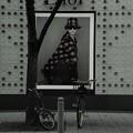 Photos: 自転車も倒す目力