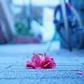 Photos: Flowers Gone