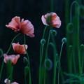 この花たちにとっての宇宙