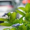 雨のち曇り時々花