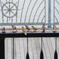 Photos: 雀の学校の夏休み