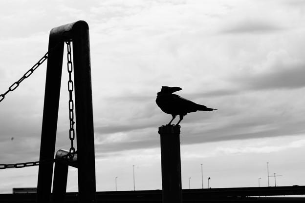 Photos: 男前な鴉
