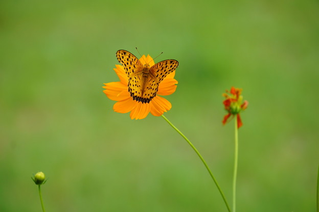 花になる蝶