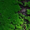 衛星写真(みたいな)