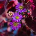 煌めく秋花