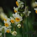 春待ちわびて