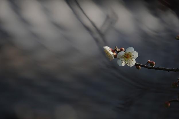 春は梅から