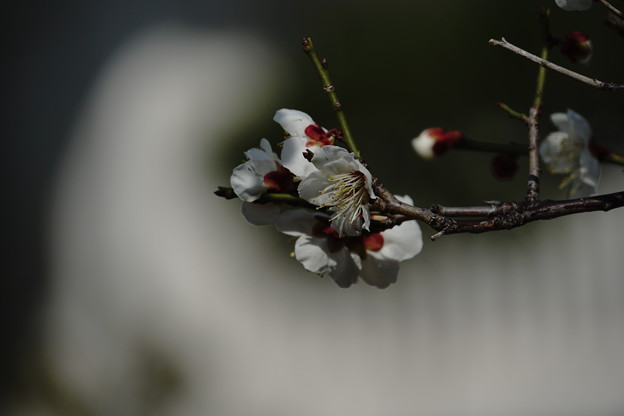 Photos: 冬と春の間で