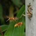 昆虫類 (156)
