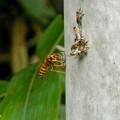 昆虫類 (158)