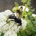 Photos: 昆虫類 (172)