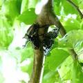 Photos: 昆虫類 (177)