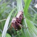Photos: 昆虫類 (178)