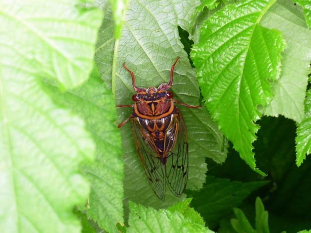Photos: 昆虫類 (183)