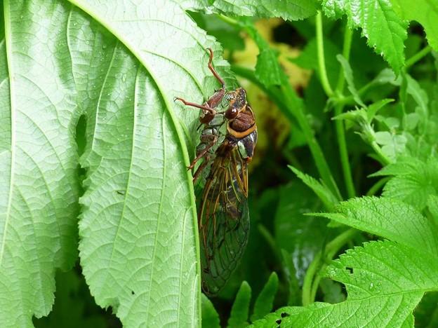Photos: 昆虫類 (184)