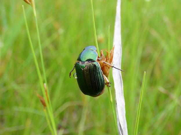 Photos: 昆虫類 (186)