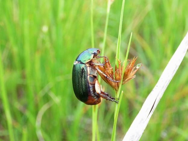 Photos: 昆虫類 (187)