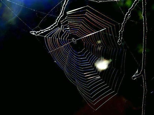 蜘蛛の巣 (2)