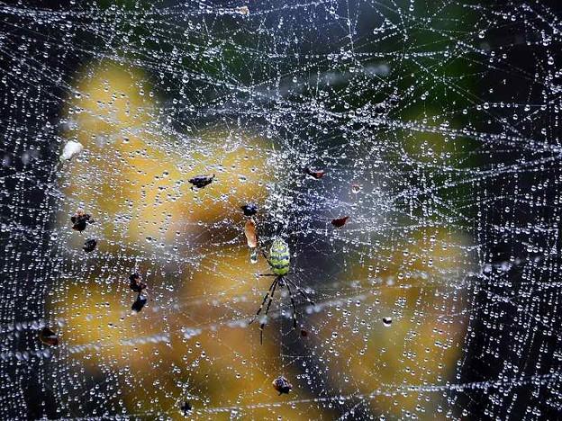 蜘蛛 (1)