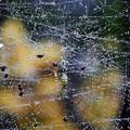 写真: 蜘蛛 (1)