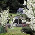 高松の池、バラ園