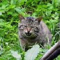 高松の池、ネコ (1)