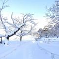 Photos: 高松の池 (1)