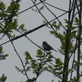写真: 迷い込んだ山の野鳥