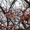 写真: 開花(1)