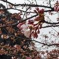 写真: 開花(3)