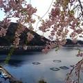桜咲く伊根浦(9)