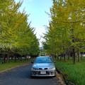 写真: イチョウ並木と愛車