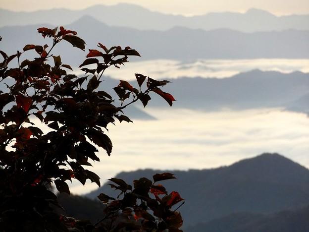 鬼嶽稲荷神社より望む雲海(5)