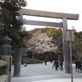 写真: 桜(2)