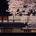 夜桜ライトアップ(満開)2