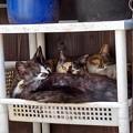 Photos: 親子3匹 仲良く籠の中
