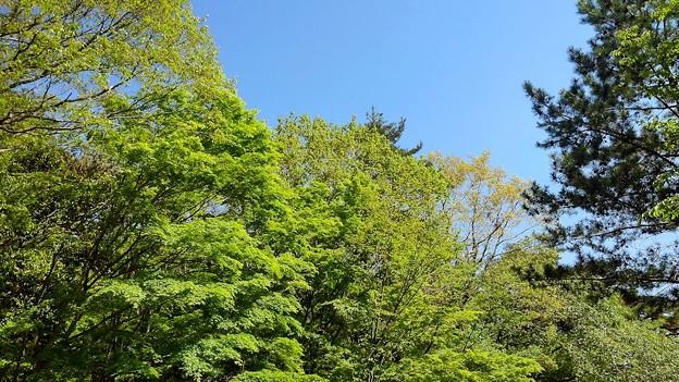 新緑が眩しい六甲山(3)