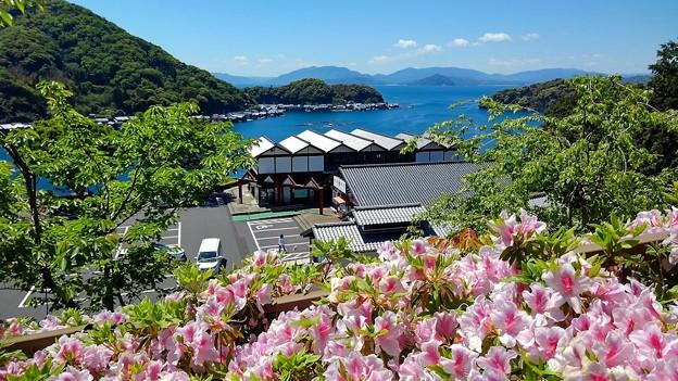 ツツジ咲く新緑の舟屋の里公園(2)