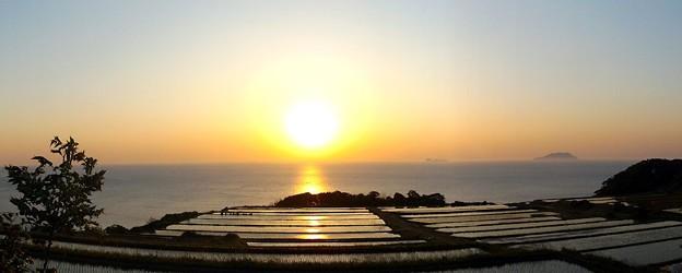 夜明けの棚田(4)