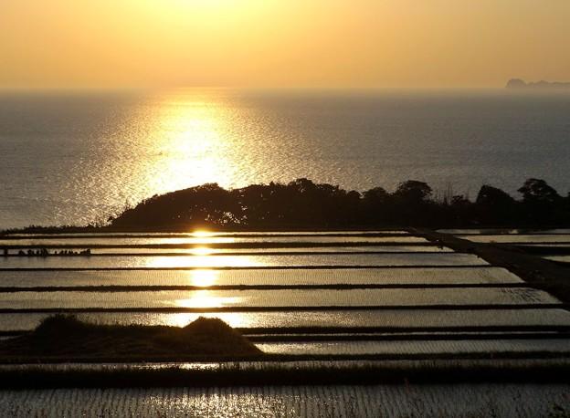 朝陽を浴びて黄金色に輝く棚田(2)
