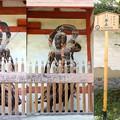 Photos: 金剛力士像