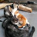 Photos: うちの居候一家(2)