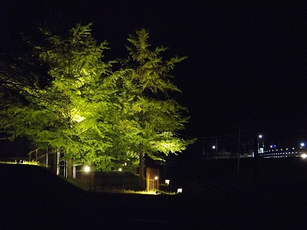 網野町引原峠大銀杏ライトアップ(4)